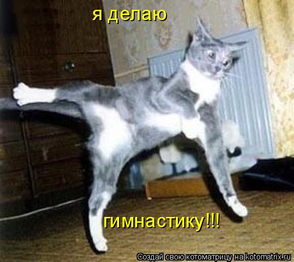 Котоматрица: я делаю гимнастику!!!