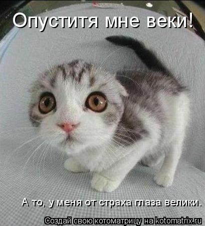 Котоматрица: Опуститя мне веки! А то, у меня от страха глаза велики.