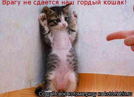 Котоматрица: Врагу не сдается наш гордый кошак!