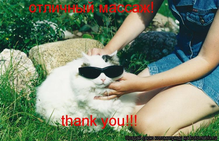 Котоматрица: отличный массаж! thank you!!!