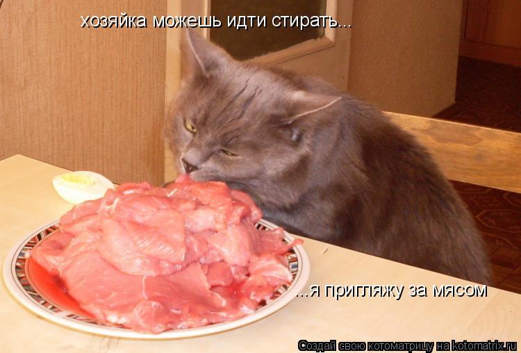 Котоматрица: хозяйка можешь идти стирать... ...я пригляжу за мясом