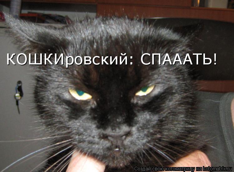 Котоматрица: КОШКИровский: СПАААТЬ!