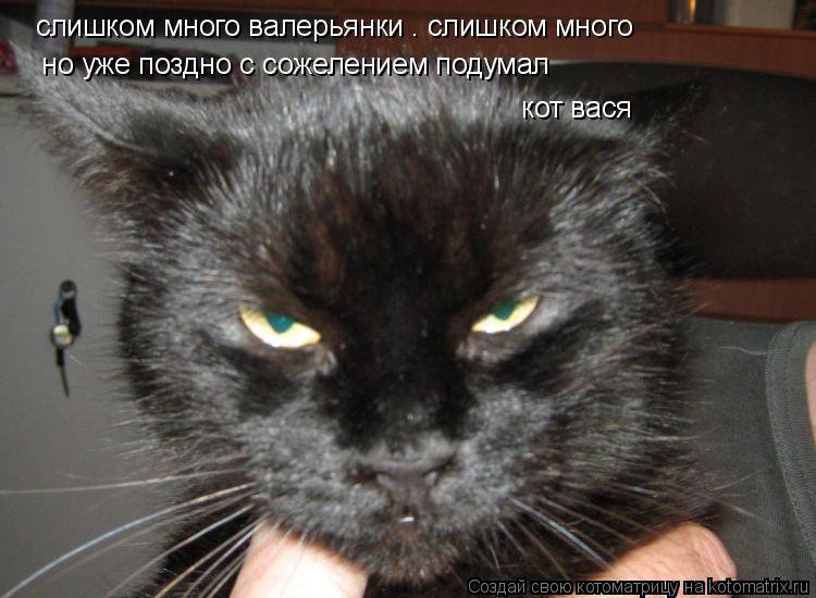 Котоматрица: слишком много валерьянки . слишком много  но уже поздно с сожелением подумал    кот вася