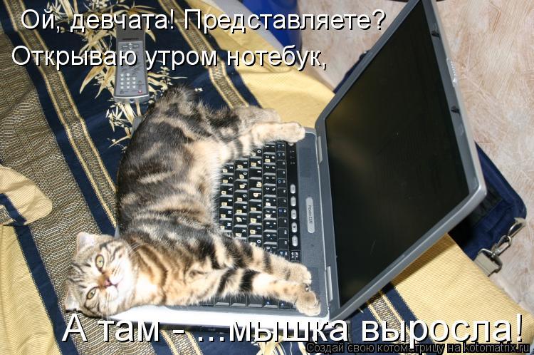 Котоматрица: Ой, девчата! Представляете? Открываю утром нотебук,  А там - ...мышка выросла!