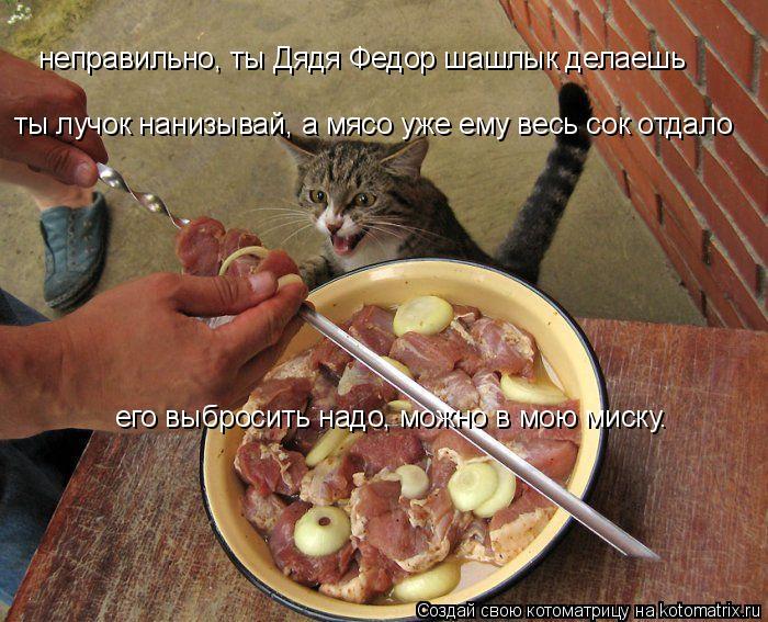 Котоматрица: неправильно, ты Дядя Федор шашлык делаешь ты лучок нанизывай, а мясо уже ему весь сок отдало его выбросить надо, можно в мою миску.