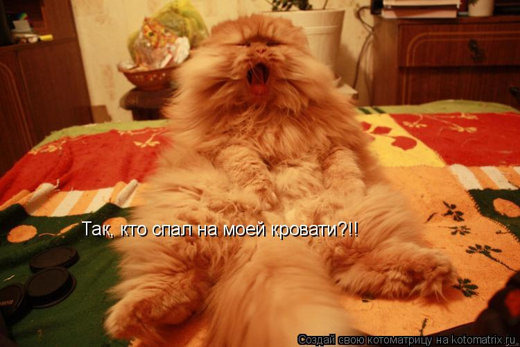 Котоматрица: Так, кто спал на моей кровати?!!