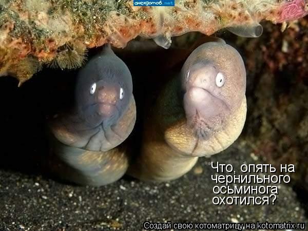 Котоматрица: Что, опять на  чернильного осьминога охотился?