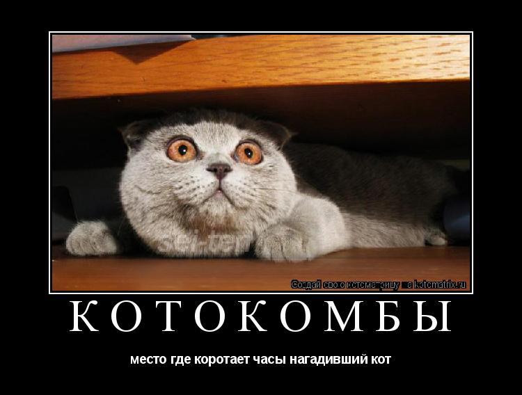 Котоматрица: КОТОкомбы место где коротает часы нагадивший кот