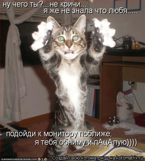 Котоматрица: ну чего ты?...не кричи... я же не знала что любя..... подойди к монитору поближе,  я тебя обниму и пАцАлую))))