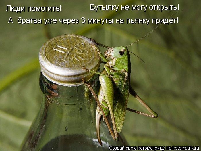 Котоматрица: Люди помогите! Бутылку не могу открыть! А  братва уже через 3 минуты на пьянку придёт!
