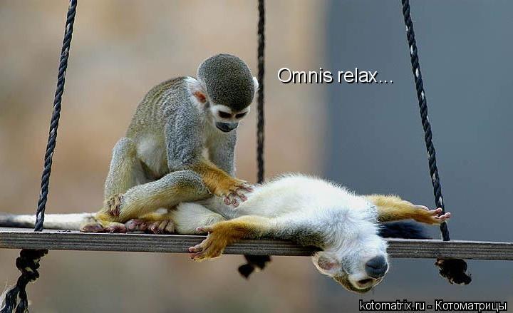 Котоматрица: Omnis relax...
