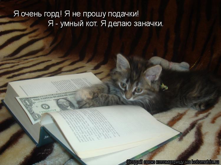 Котоматрица: Я очень горд! Я не прошу подачки! Я - умный кот. Я делаю заначки.