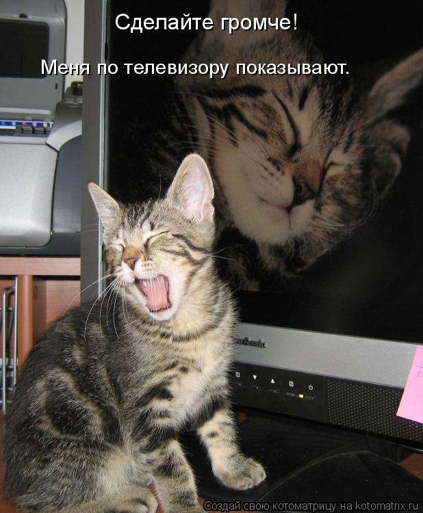 Котоматрица: Сделайте громче!  Меня по телевизору показывают.
