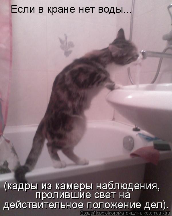 Котоматрица: Если в кране нет воды... (кадры из камеры наблюдения, пролившие свет на  действительное положение дел).