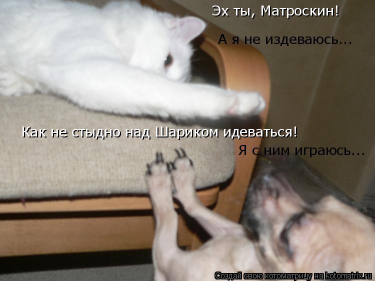 Котоматрица: Эх ты, Матроскин! Как не стыдно над Шариком идеваться! А я не издеваюсь... Я с ним играюсь...