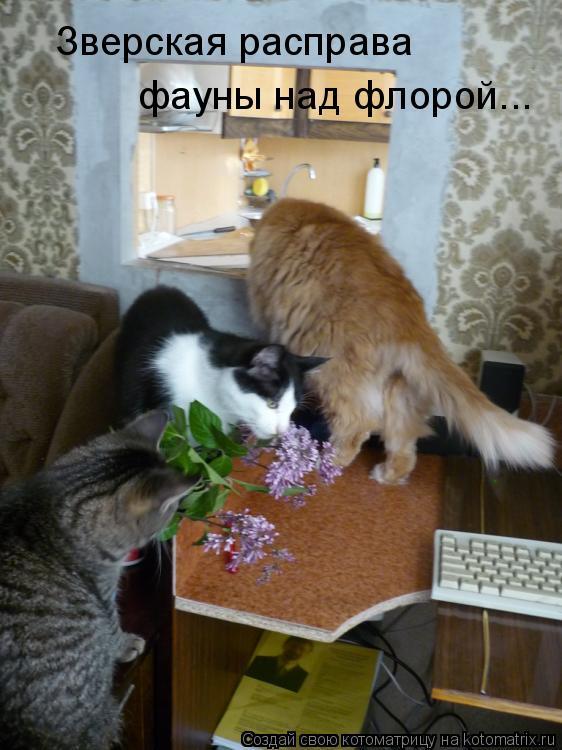 Котоматрица: Зверская расправа  фауны над флорой...