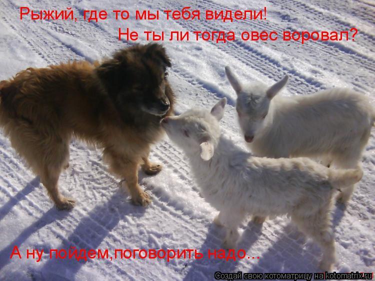 Котоматрица: Не ты ли тогда овес воровал? А ну пойдем,поговорить надо... Рыжий, где то мы тебя видели!