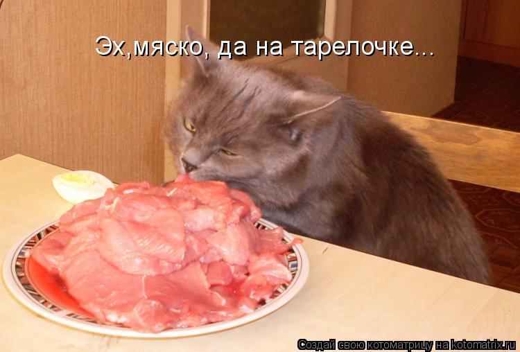 Котоматрица: Эх,мяско, да на тарелочке...