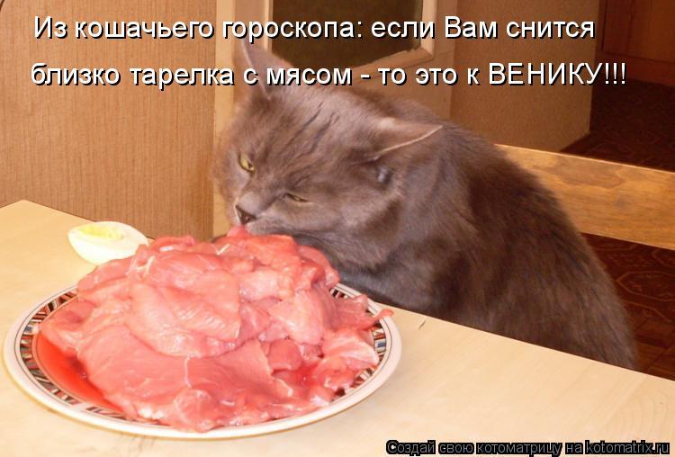 Котоматрица: Из кошачьего гороскопа: если Вам снится близко тарелка с мясом - то это к ВЕНИКУ!!!