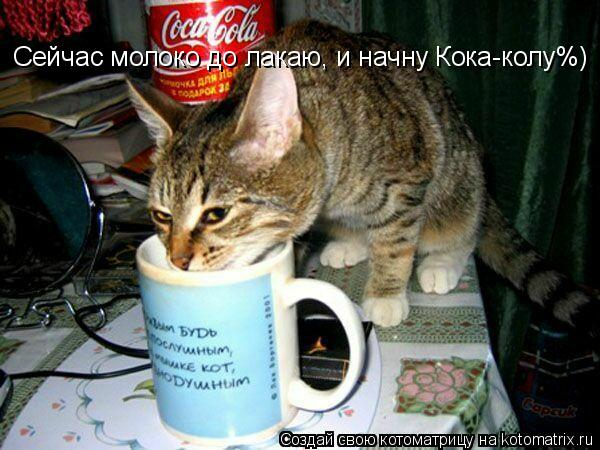 Котоматрица: Сейчас молоко до лакаю, и начну Кока-колу%)
