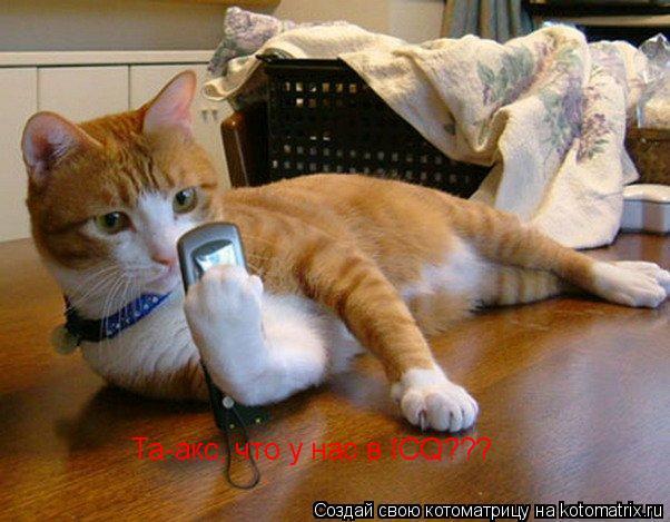 Котоматрица: Та-акс, что у нас в ICQ???