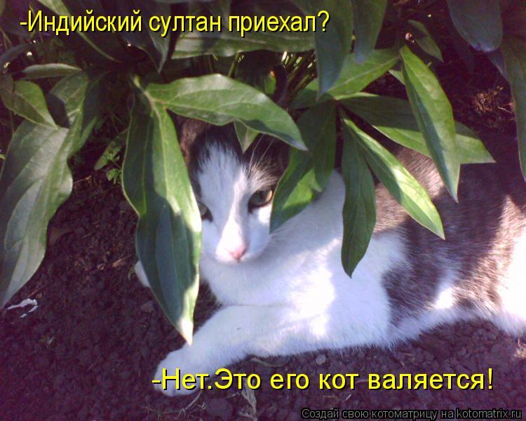 Котоматрица: -Индийский султан приехал? -Нет.Это его кот валяется!