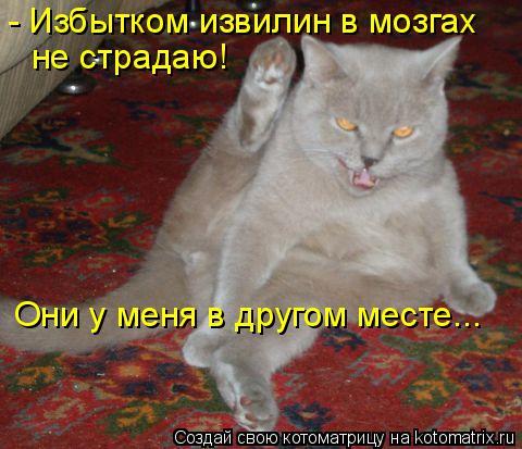 Котоматрица: - Избытком извилин в мозгах не страдаю! Они у меня в другом месте...