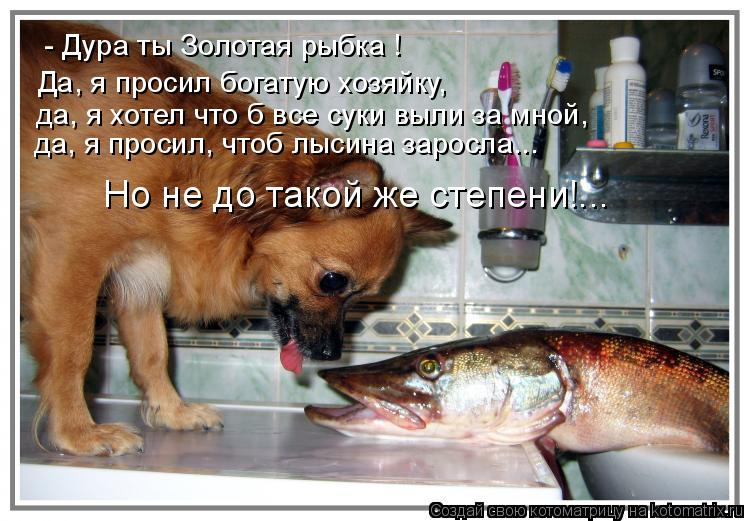Котоматрица: - Дура ты Золотая рыбка ! Да, я просил богатую хозяйку,  да, я просил, чтоб лысина заросла... да, я хотел что б все суки выли за мной, Но не до тако