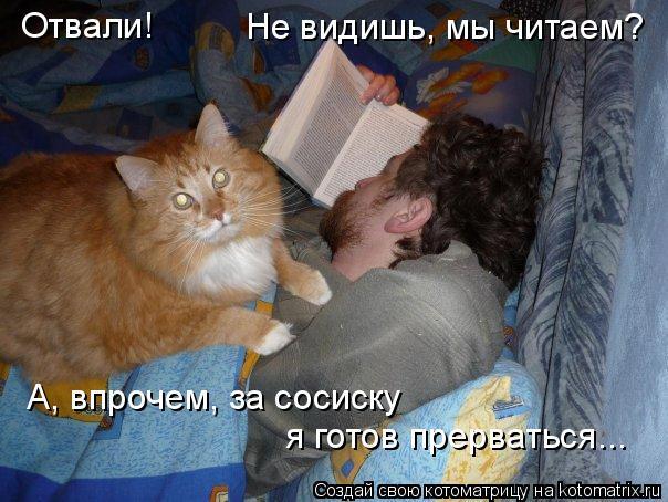 Котоматрица: Отвали! Не видишь, мы читаем? А, впрочем, за сосиску  я готов прерваться...
