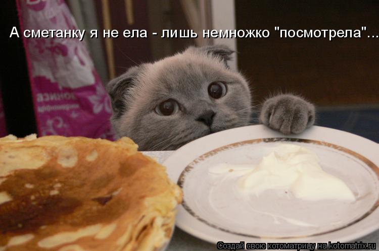 """Котоматрица: А сметанку я не ела - лишь немножко """"посмотрела""""..."""