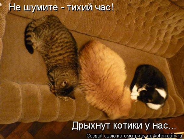 Котоматрица: Не шумите - тихий час! Дрыхнут котики у нас...