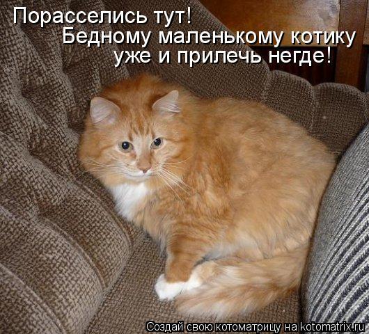 Котоматрица: Порасселись тут! Бедному маленькому котику  уже и прилечь негде!