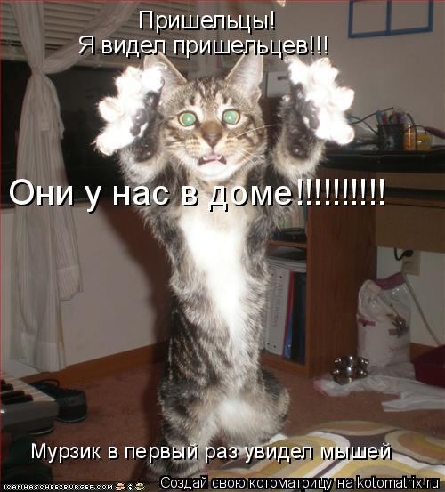 Котоматрица: Пришельцы! Я видел пришельцев!!! Они у нас в доме!!!!!!!!!! Мурзик в первый раз увидел мышей