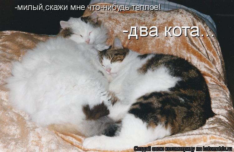 Котоматрица: -милый,скажи мне что-нибудь теплое! -два кота...