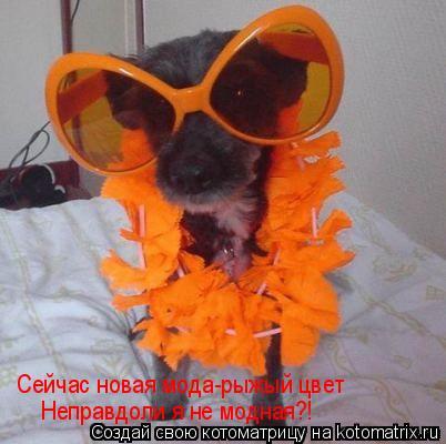 Котоматрица: Сейчас новая мода-рыжый цвет Неправдоли я не модная?!