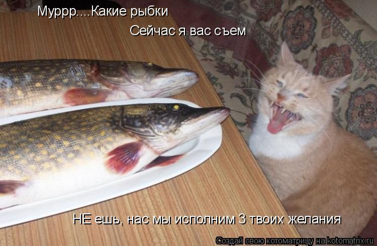 Котоматрица: Муррр....Какие рыбки Сейчас я вас съем НЕ ешь, нас мы исполним 3 твоих желания