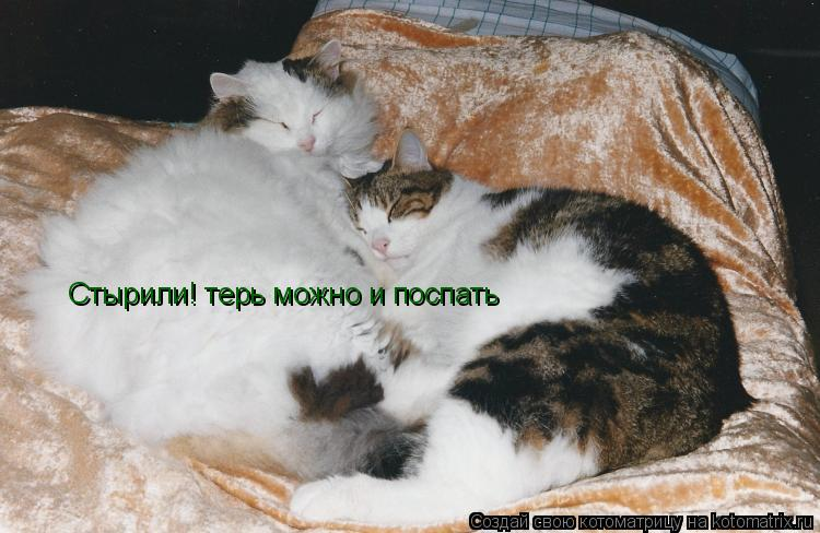 Котоматрица: Стырили! терь можно и поспать