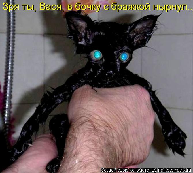 Котоматрица: Зря ты, Вася, в бочку с бражкой нырнул...