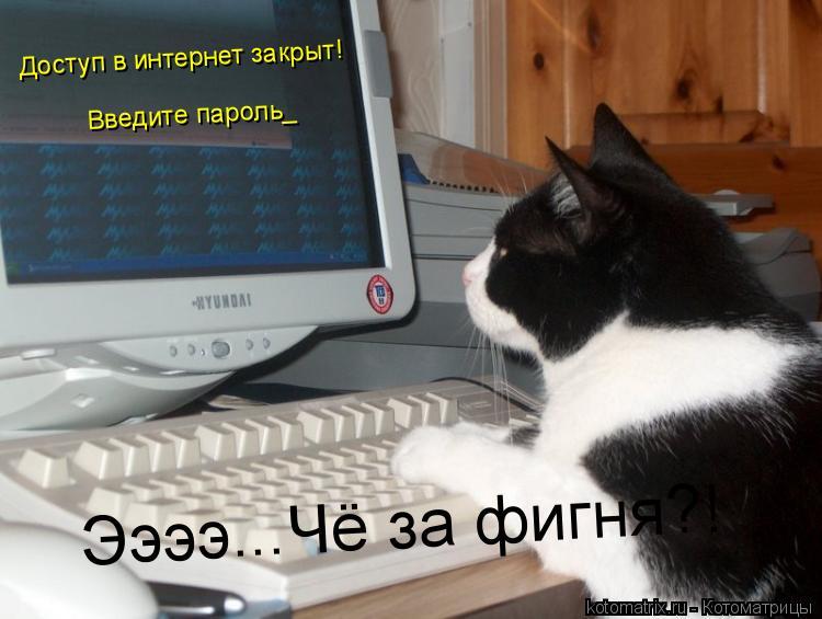 Котоматрица: Доступ в интернет закрыт! Введите пароль_ Ээээ...Чё за фигня?!