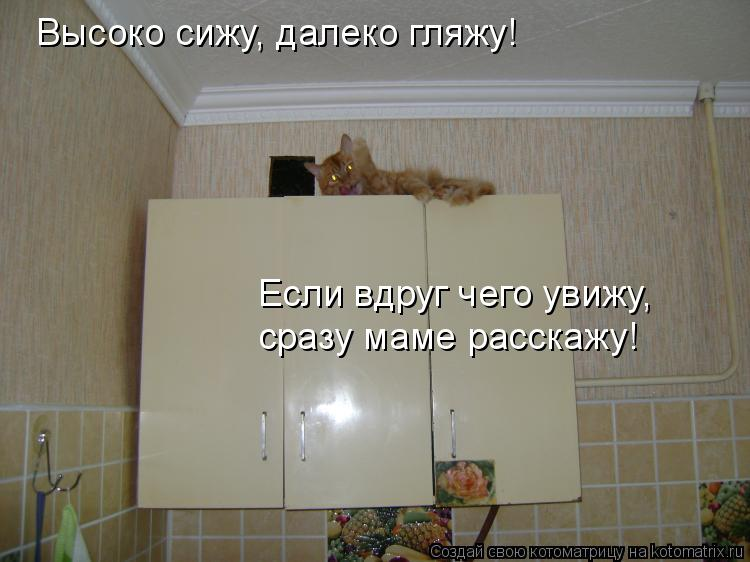 Котоматрица: Высоко сижу, далеко гляжу! Если вдруг чего увижу, сразу маме расскажу!