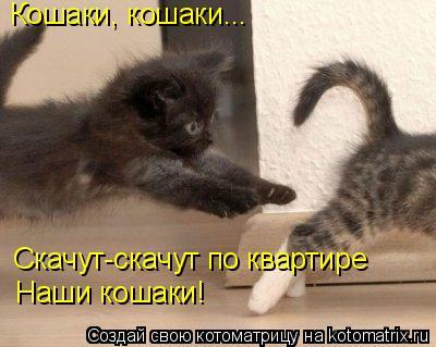 Котоматрица: Кошаки, кошаки... Скачут-скачут по квартире Наши кошаки!