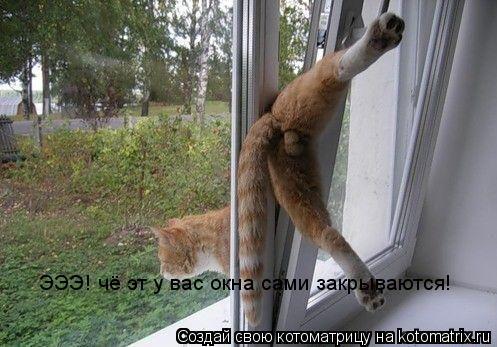 Котоматрица: ЭЭЭ! чё эт у вас окна сами закрываются!