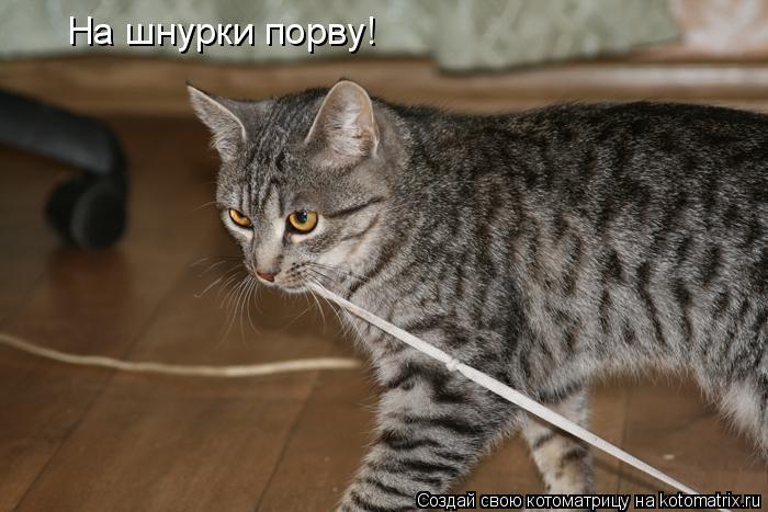 Котоматрица: На шнурки порву!