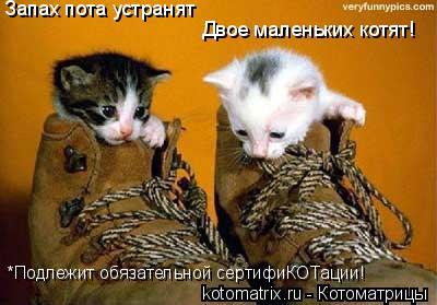Котоматрица: Запах пота устранят Двое маленьких котят! *Подлежит обязательной сертифиКОТации!