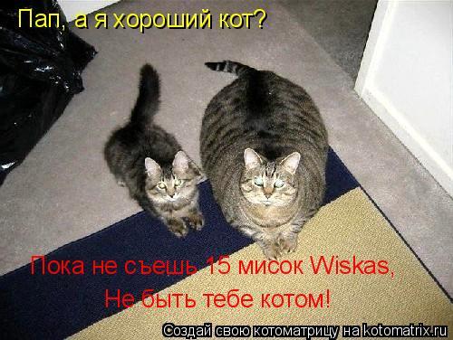 Котоматрица: Пап, а я хороший кот? Пока не съешь 15 мисок Wiskas,  Не быть тебе котом!