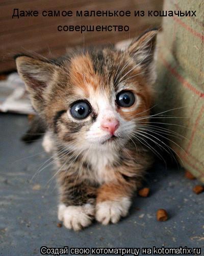Котоматрица: Даже самое маленькое из кошачьих совершенство