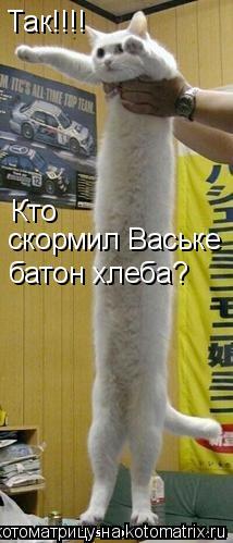 Котоматрица: Так!!!!  Кто  скормил Ваське батон хлеба?