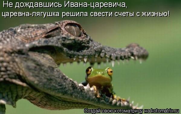 Котоматрица: Не дождавшись Ивана-царевича, царевна-лягушка решила свести счеты с жизнью!