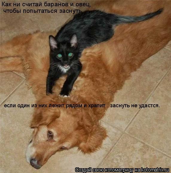 Котоматрица: Как ни считай баранов и овец,   чтобы попытаться заснуть,   если один из них лежит рядом и храпит – заснуть не удастся…