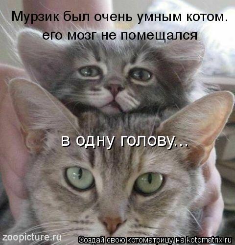 Котоматрица: Мурзик был очень умным котом. его мозг не помещался  в одну голову...